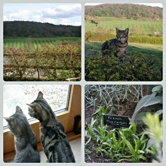 Stripey Cats & fields